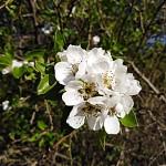Jaro v plném květu