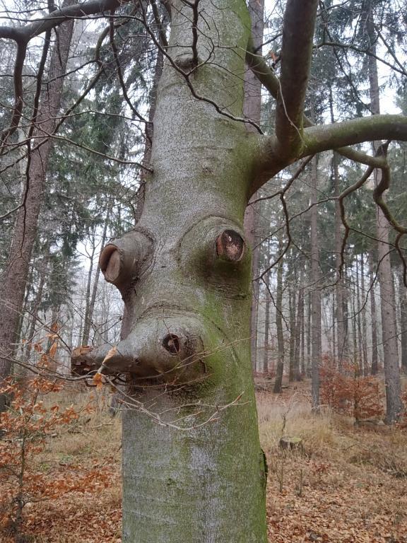 Já jsem duch lesa