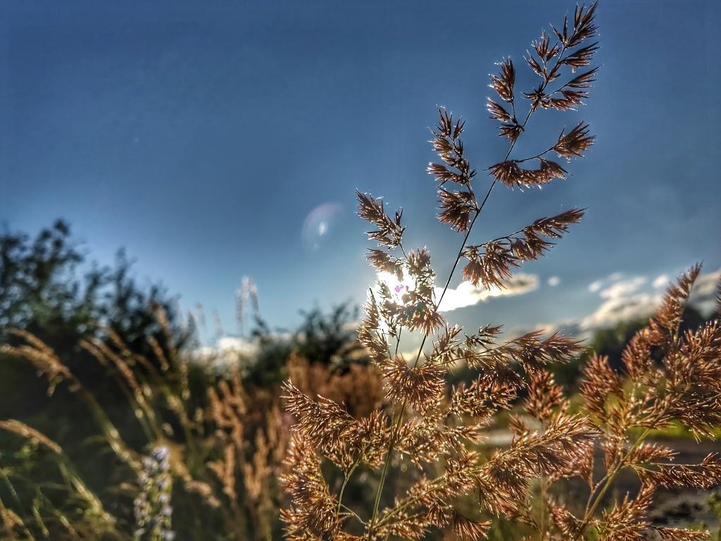Trocha trávy.....