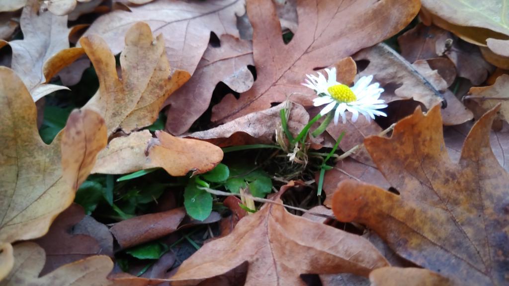 Podzim nebo jaro....
