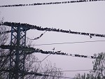 Elektrikári.. 1