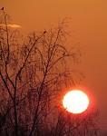 Slnko a breza