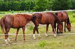 Tři koně v ohradě