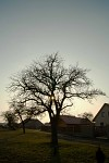 slunce mezi větvema