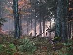 Pozimní les