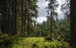 V lese u Hamerského potoka