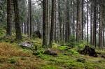 V boubínském pralese