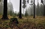 Ticho podzimního lesa