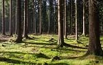 V lese u Velkého Dářka