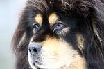 Tibetská doga I