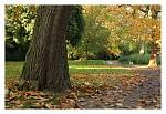Podzim v parku - II