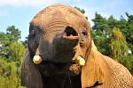 Sloni Oáza