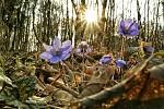 Jaro v rozkvětu