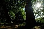 platanovy les