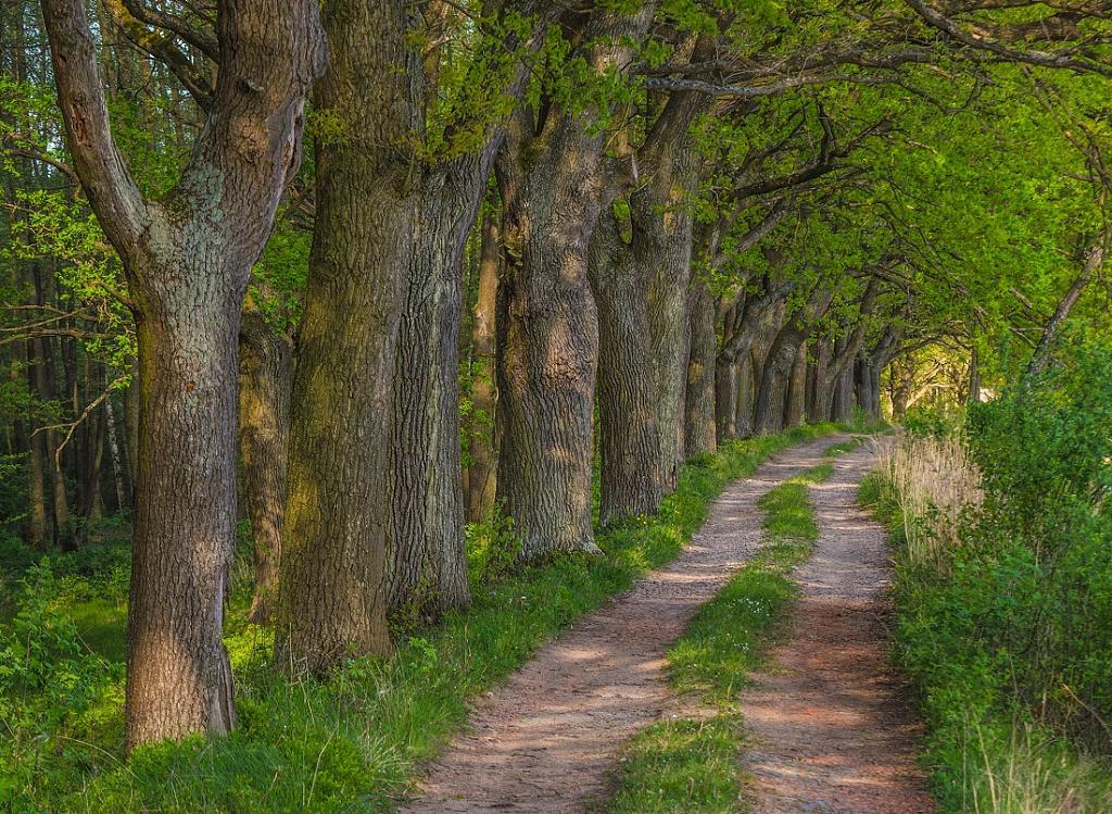 Cesta kolem rybníka Rudy