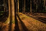 Večerni svetlo v lese