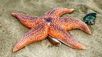 Hvězdice - Zandvoort aan Zee, Holland