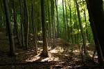 Buchlovský les
