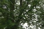 Průlet korunou stromu