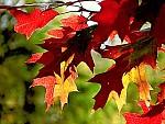 něžný podzim