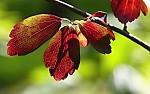 podzimní motív