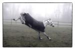 Veselý kůň