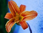 Krása květu