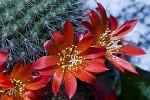 Trny a květy