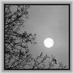 Slnko v zajatí hmly