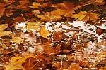 Podzim od Mirek M