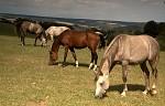 Koně I.