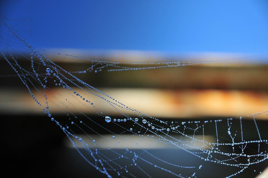 Kapky na pavučině