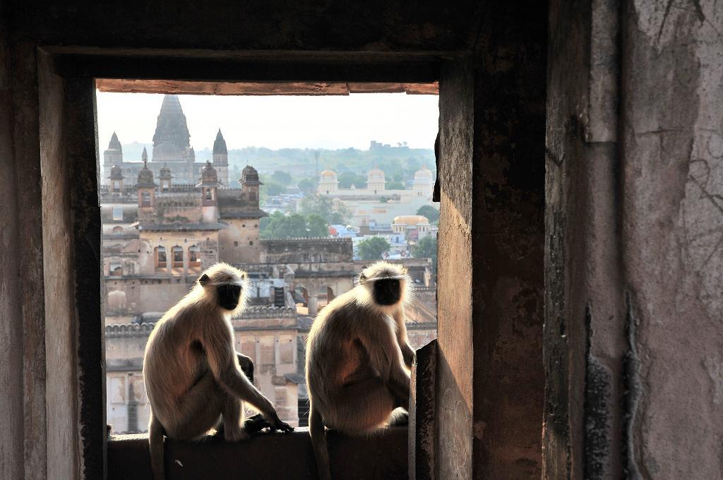 Okno do Indie