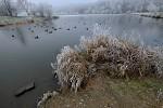 Rybník v Kyjích