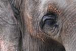 Sloní pohled