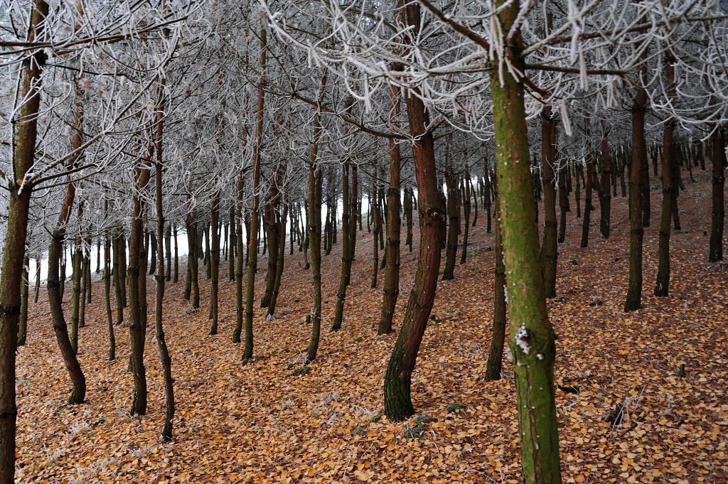 V zimě v lese