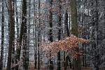 Lesní zima