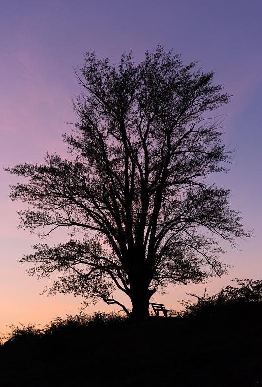 podvečerní silueta