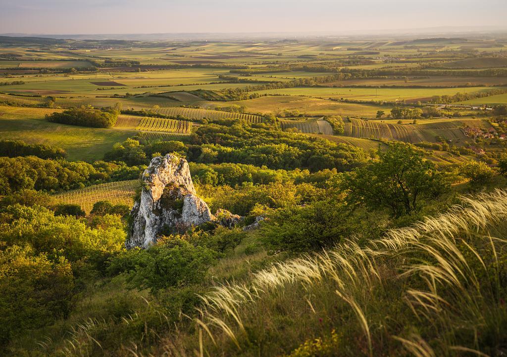 krajina vinic a polí