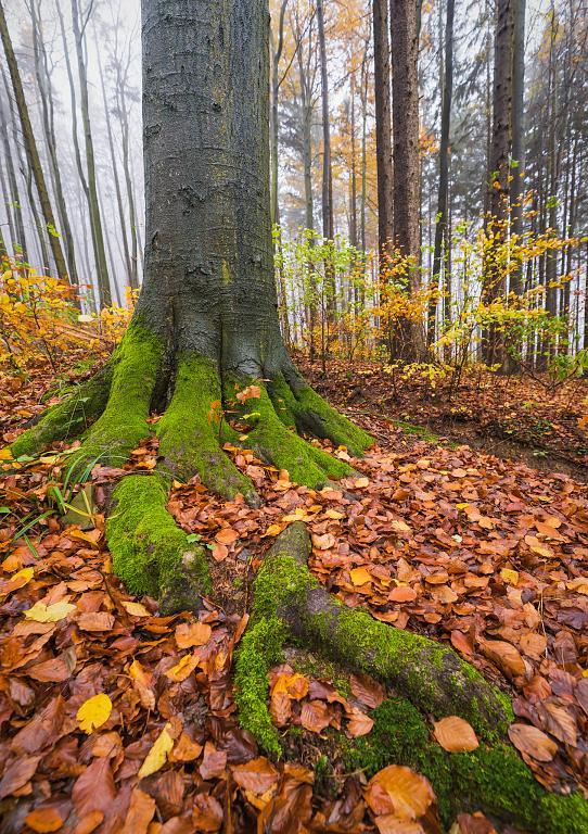 v podzimních lesích