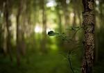 lesní cesta od haklik