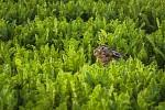 Vyděšený zajíc :)
