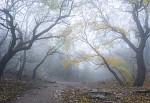 Mlha pod Pálavou II.