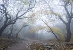 Mlha pod Pálavou II. od haklik