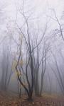 Mlhavý les