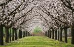Ovocný sad v jarním podání