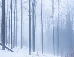 mlha na procházce lesem na německé straně Šumavy