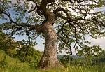 strom v krajině