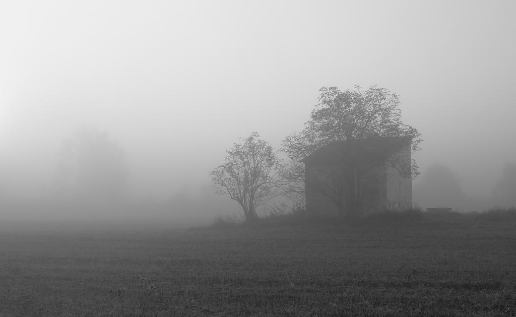 Ranní procházka mlhou
