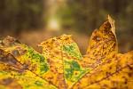 v podzimní přírodě